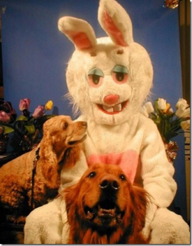 easter_bunny_dogs_20120404_1961245771.png.jpeg