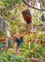 Hunning bird