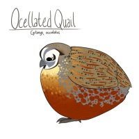 Click to visit the Sunquail shop.