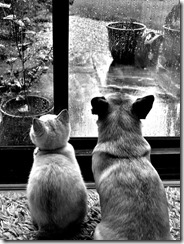 This week's prompt is a photo taken by Gen Harris. These are her dog and cat.